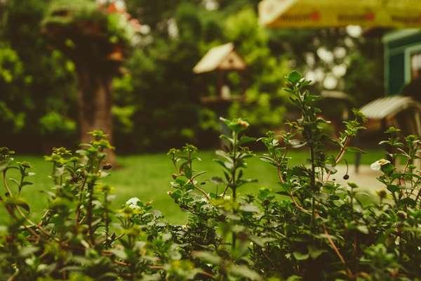 Porządki w ogrodzie Barlinek